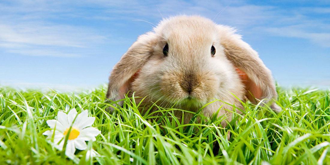 cura-conigli